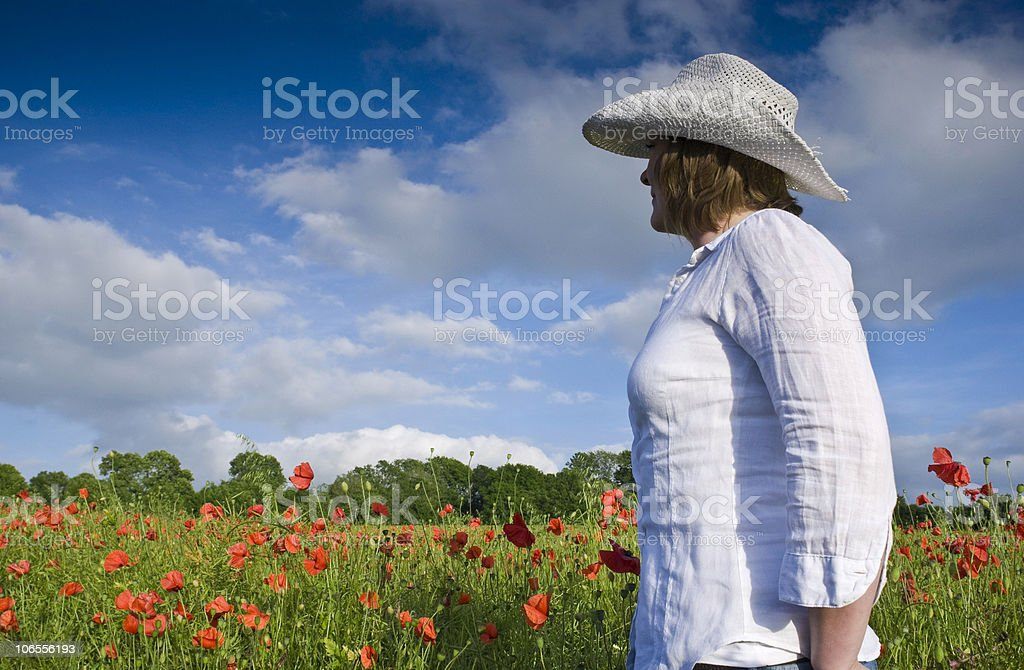 Wild poppies royalty-free stock photo