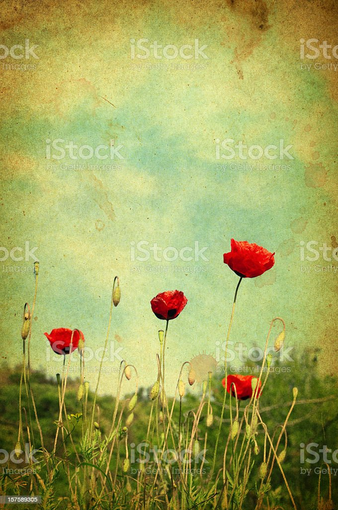 Wild poppies, retro-style photo stock photo