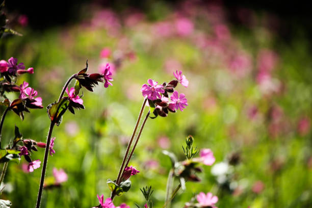 Wild purple flowers stock photo