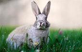 Wild rabbit close up on the grass