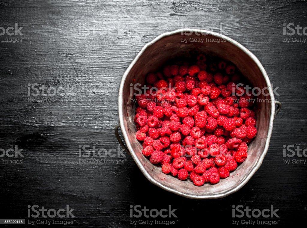 Wild raspberry in the old pot. stock photo