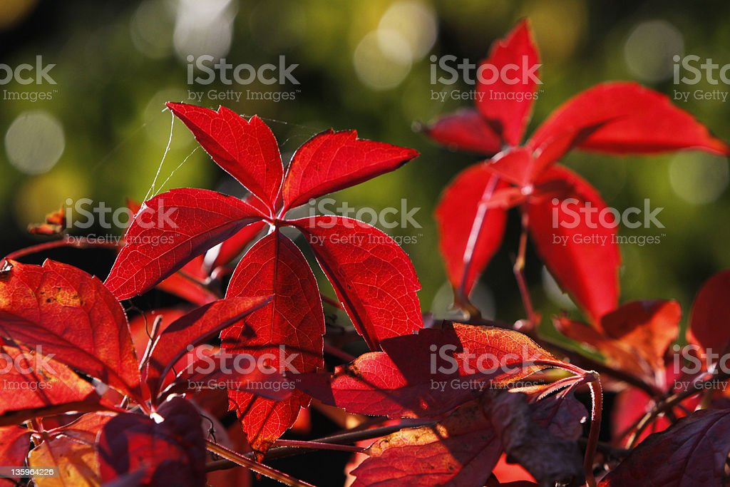 Wild red colored wine against the light stock photo