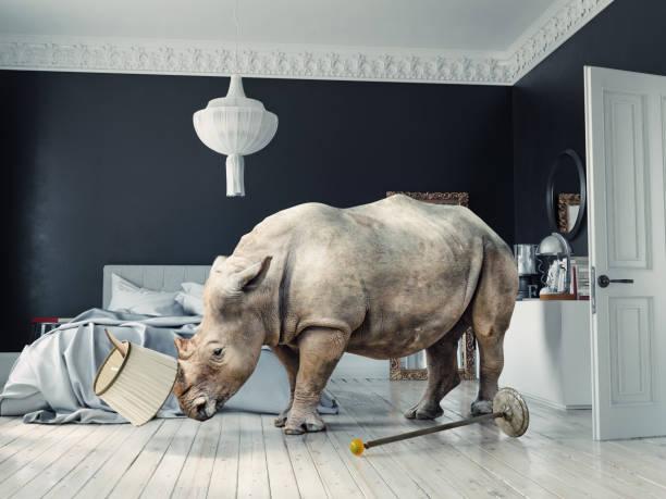 rinoceronte salvaje en el dormitorio de lujo - foto de stock