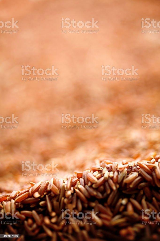 wild rice royalty-free stock photo