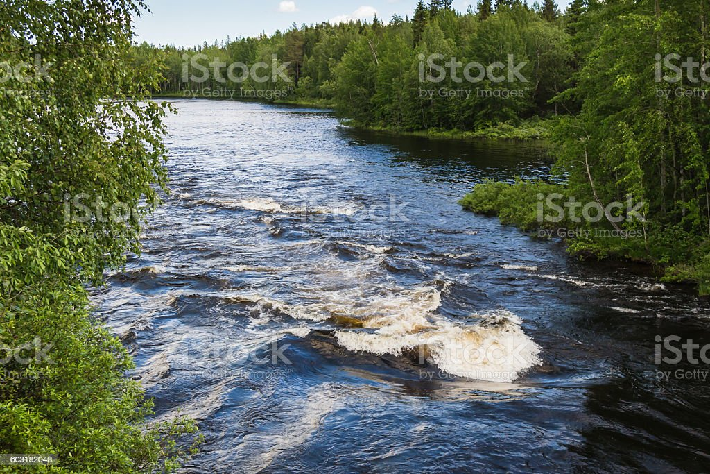 Wild river in forest stock photo