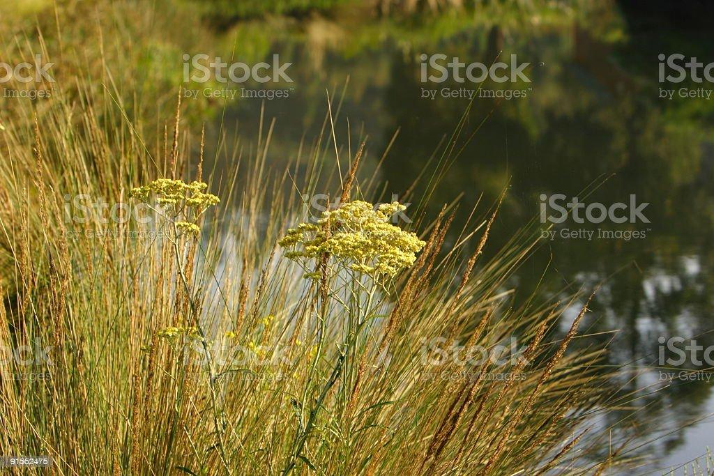 Wild river royalty-free stock photo