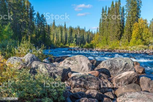 Photo of Wild river winds through the forest deep in the arctic. Wild nature of Swedish Lapland close to Tjaktjajavrre lake, Sarek National Park.