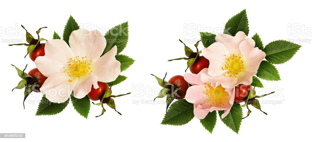 Wild rose flowers and berries arrangements stock photo