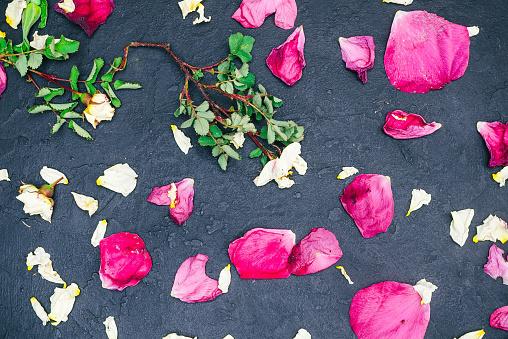 Wild rose petals over black