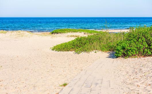 Wild roses take the beach