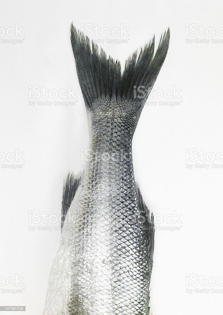 Wild Sea Bass stock photo