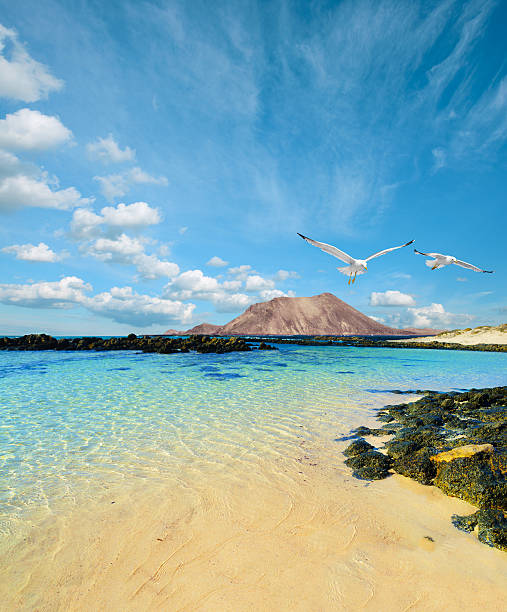 wild seashore in fuerteventura - desolated stock pictures, royalty-free photos & images