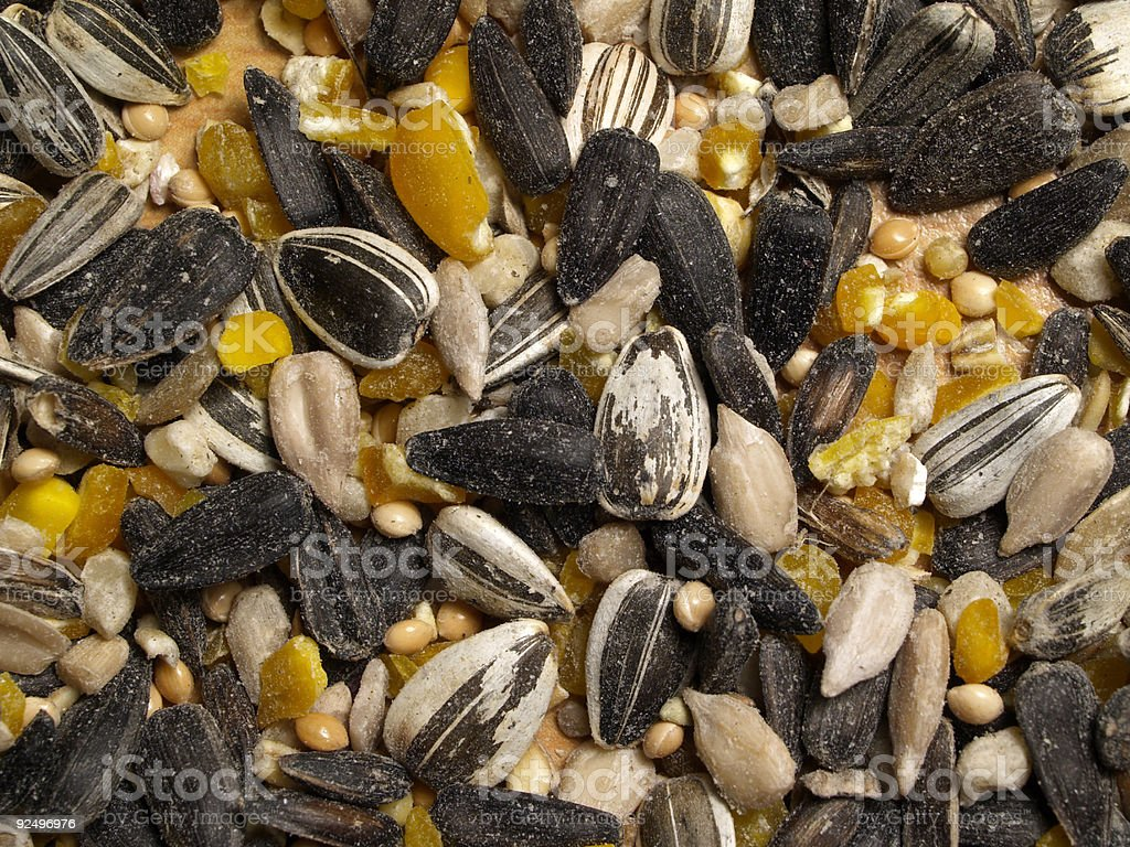 Wild Seed royalty-free stock photo