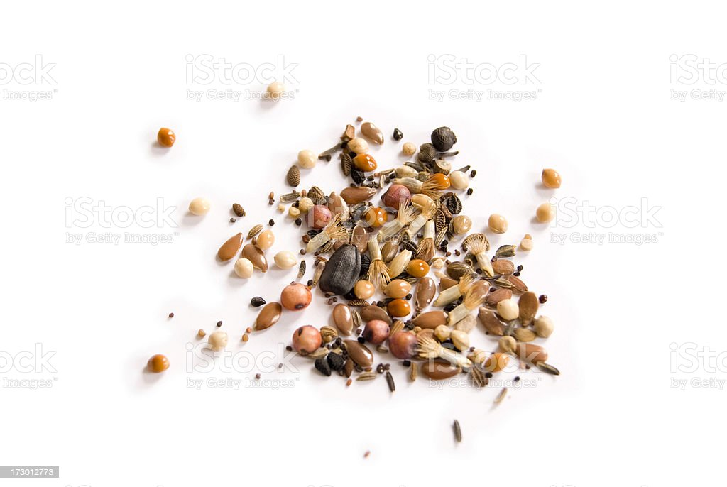 Wild Seeds stock photo