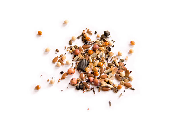 wild seeds - seed stock photos and pictures