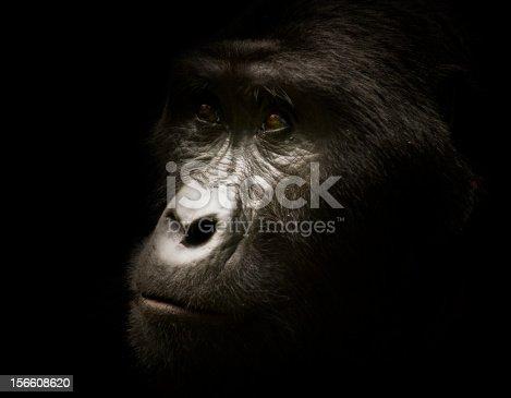 http://i152.photobucket.com/albums/s173/ranplett/africa.jpg