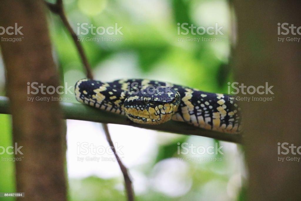 Wild snake on nature background stock photo