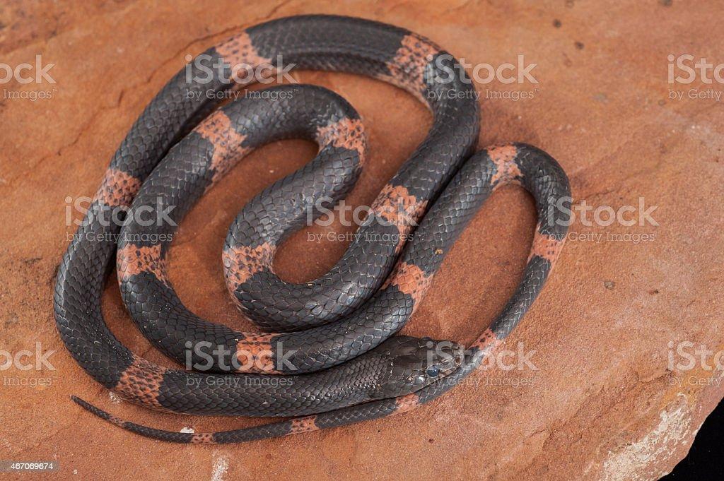 wild snake stock photo