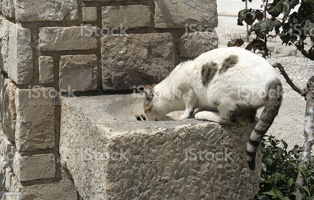 Wild spanischen Cat Lizenzfreies stock-foto