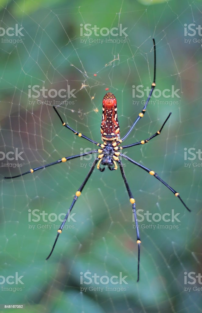 Wild Spider stock photo