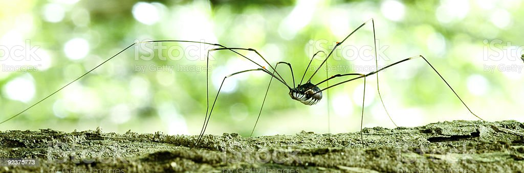 Wild spider royalty-free stock photo