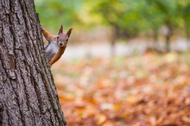 A wild squirel captured in a cold sunny autumn day – Foto