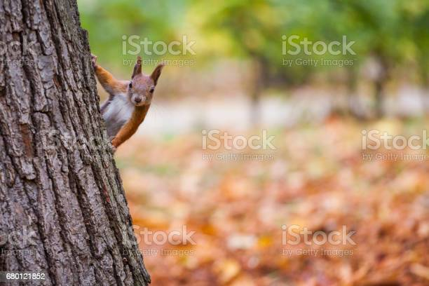 Photo of A wild squirel captured in a cold sunny autumn day