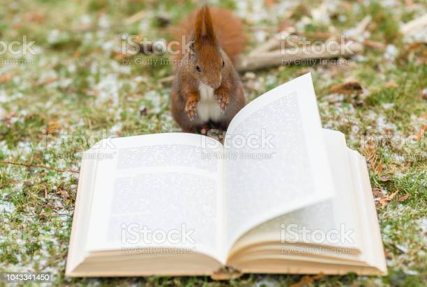 Photo of Wild squirrel reading a book outdoors