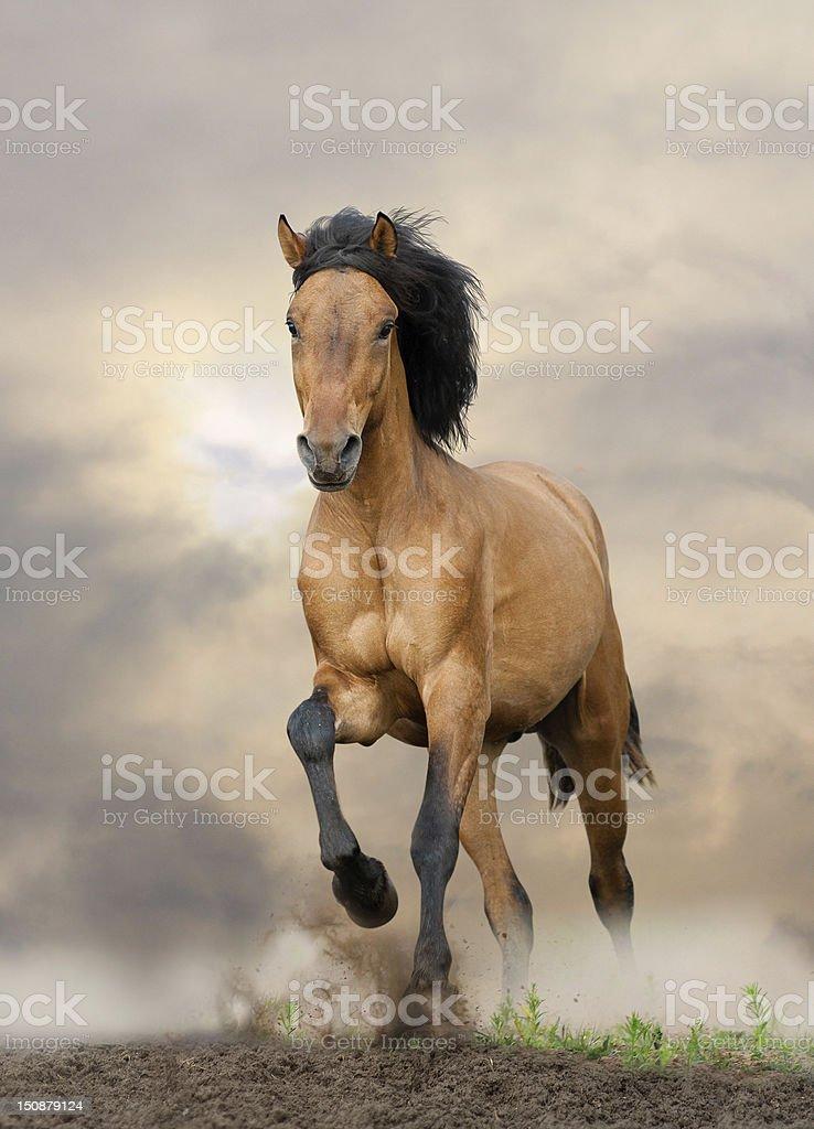 Wild Stallion Stock Photo Download Image Now Istock