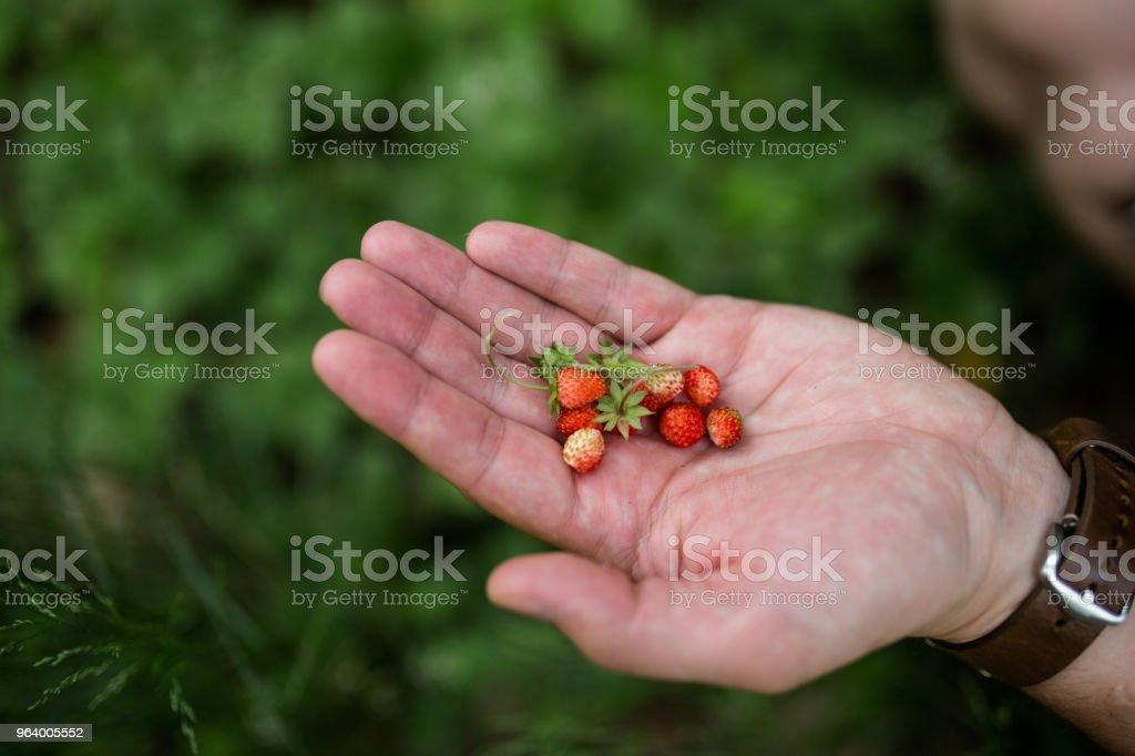 Wild strawberries - Royalty-free Adult Stock Photo