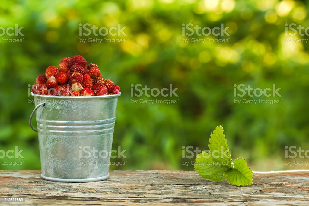 wild strawberry in a bucket on a background of green стоковое фото