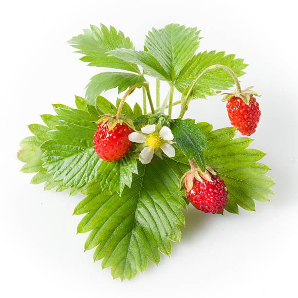 wild strawberry isolated on white - wilde aardbei stockfoto's en -beelden