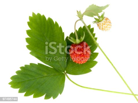 Wild Strawberry Stock Photo & More Pictures of Beauty In Nature