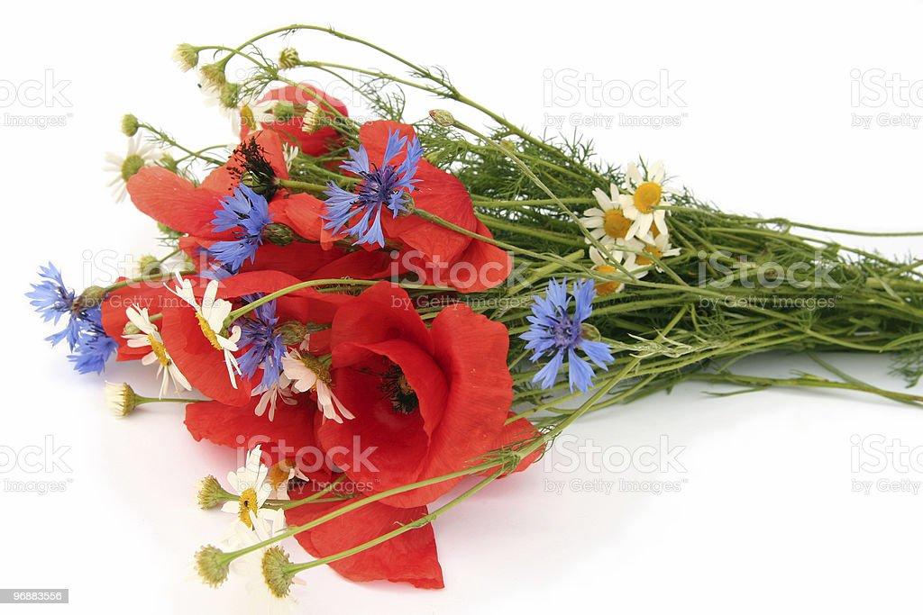 Wild Sommer Blumen Lizenzfreies stock-foto