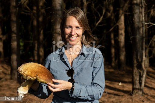 Image of a woman harvesting a wild Porcini mushroom (Boletus edulis) at a pine tree forest