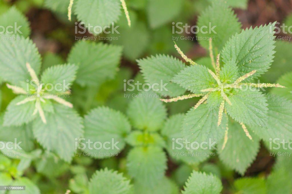 Wild vegetation in fields of Spain stock photo