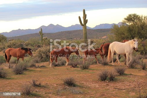 Hiking with a herd of wild horses.