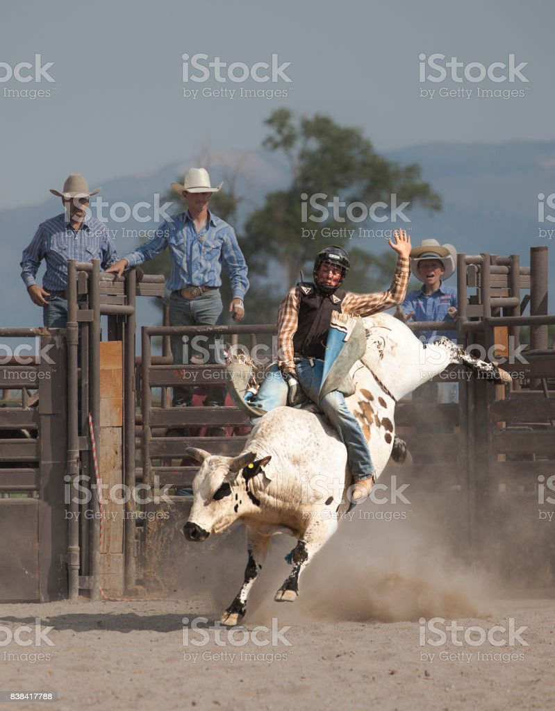 wild west rodeo cowboy riding a bucking white bull stock photo
