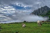 Hiking tour in lovely surroundings in Himalayas mountain