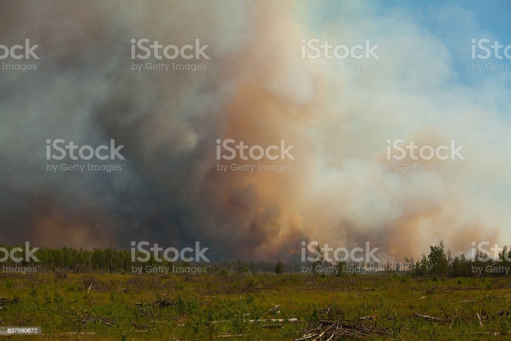 wild wildfire summer without people in forest stock photo