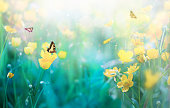 Wild Flowers, Green Grass and Butterflies