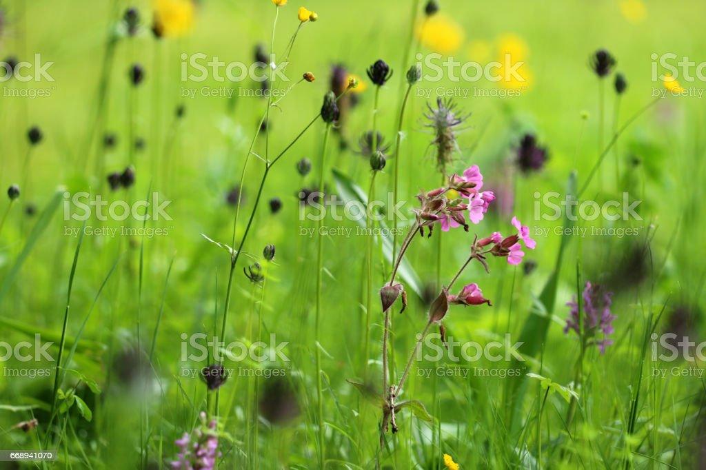 Wildblumenwiese stock photo