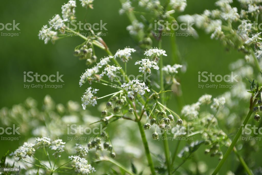 Wilde Blüten royalty free stockfoto