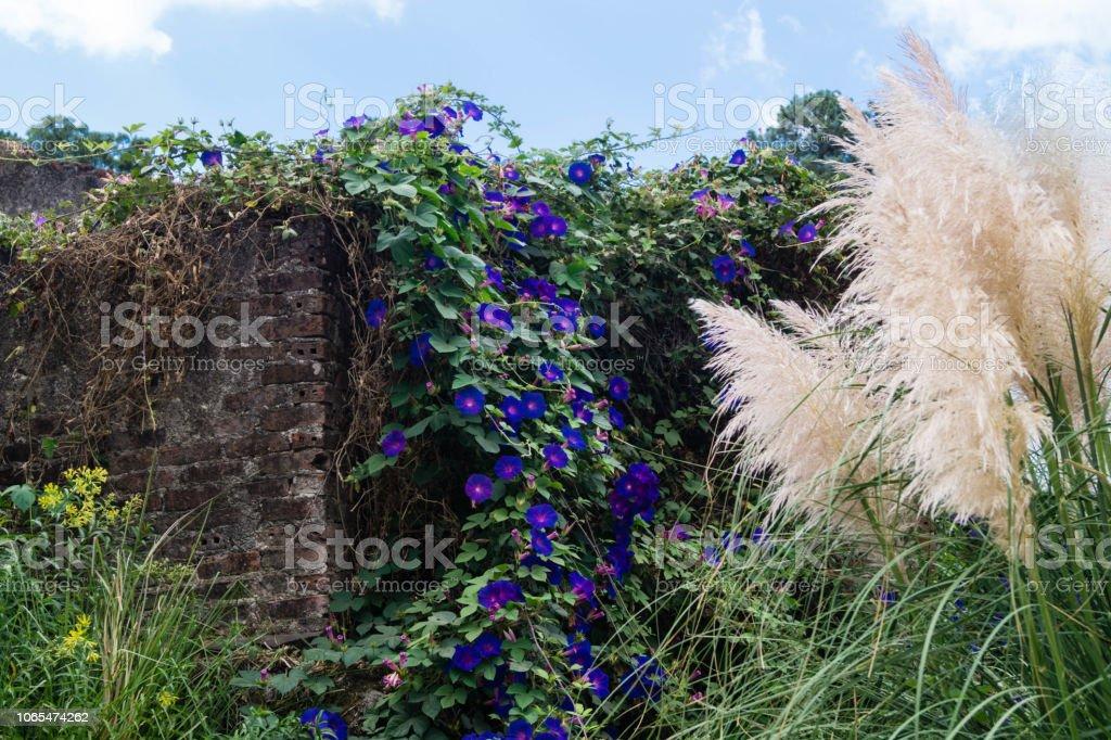 der de Wilde Blumen Algarve - foto de acervo