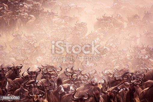 Vast wildebeest herd on the move - Masai Mara, Kenya