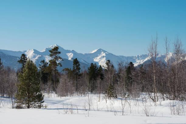 wilderness area of siberia. - сибирь стоковые фото и изображения