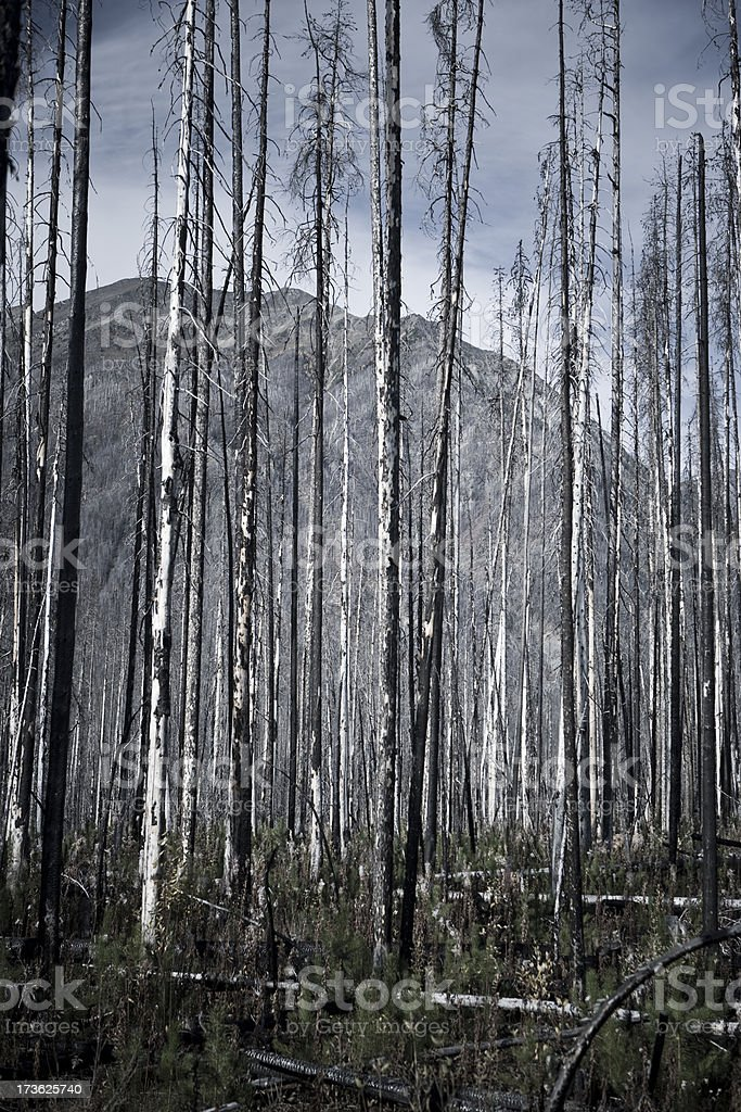 Wilderness forest fire aftermath royalty-free stock photo