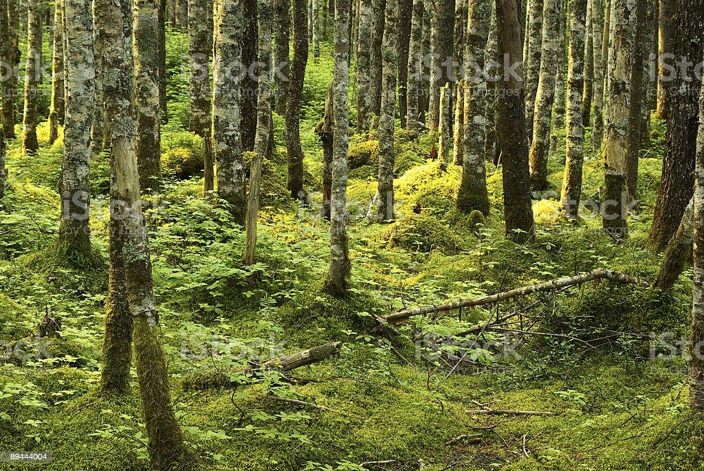 Wilderness forest 免版稅 stock photo