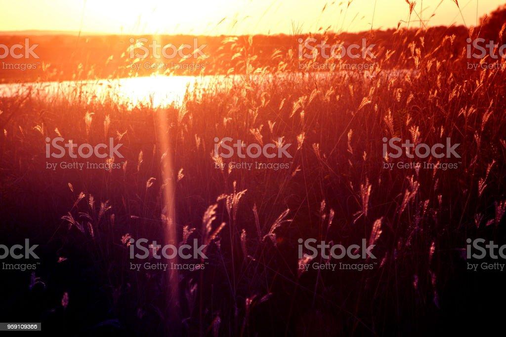 wilderness nature and sunlight stock photo