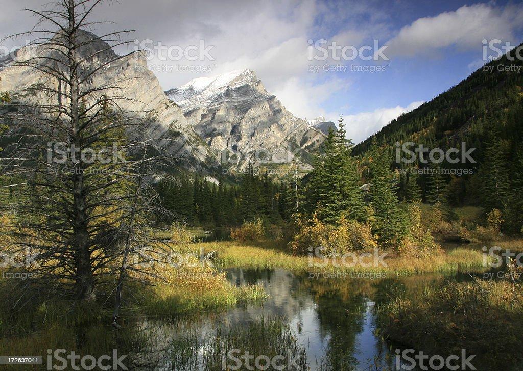 Wilderness royalty-free stock photo
